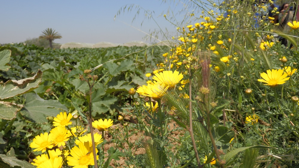 Tunisia flowers
