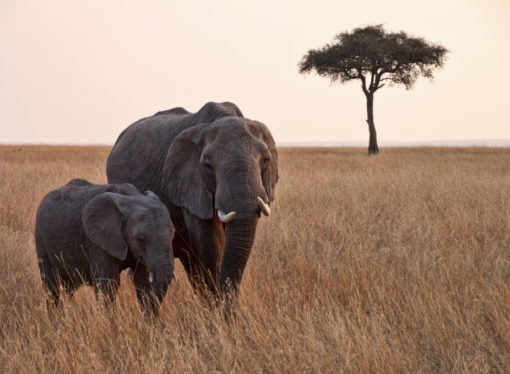 Try These 6 Adventurous Activities in Africa